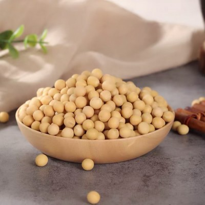 阳光嘉里郑1307 新品种大豆 高产大豆厂家直销 精挑细选优质大豆
