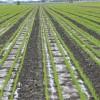 小麦灌溉用滴灌带 迷宫式滴灌带批发 滴灌带大量供应