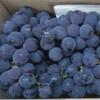 耐储运葡萄 酸甜粒大葡萄 新鲜巨峰葡萄 量大价优